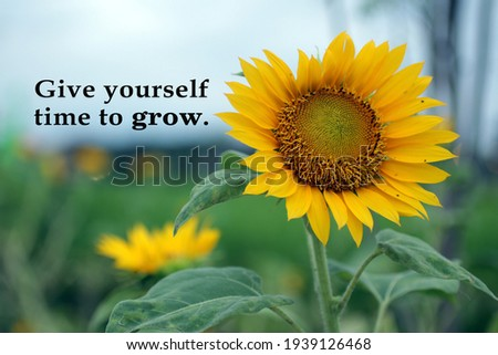 Motivational quote - Give yourself time to grow. Life process inspirational words concept on background of sunflower plant growth in the field.