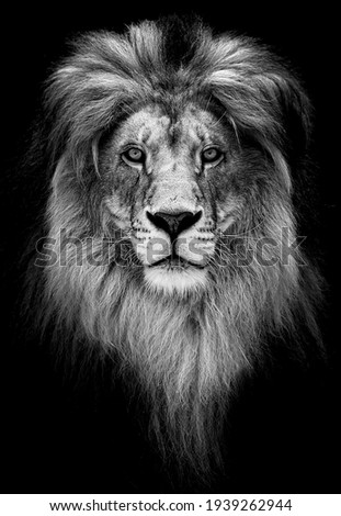 Portrait of a Beautiful lion, lion in dark. Royalty-Free Stock Photo #1939262944