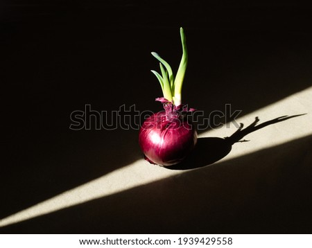 A sunbeam falls on the onion on the table. Dark photo.