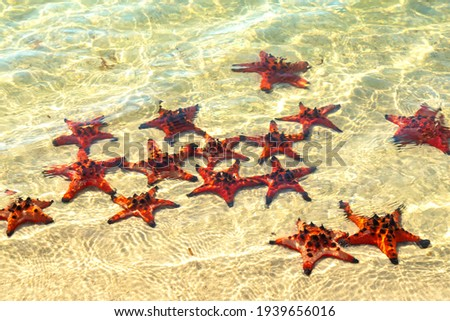 Group of Glittering Starfish on sandy beach in a beautiful sunny day. The starfishes are sunbathing on the beach sand in front of the ocean. Royalty-Free Stock Photo #1939656016