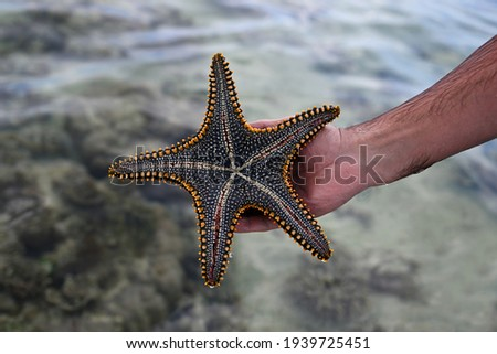 A man's hand holds a live, large beautiful and bright starfish in his hands. Starfish on the reverse side with tentacles on the background of water. Starfish pulled from the ocean Royalty-Free Stock Photo #1939725451