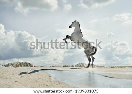 majestic horse, Fabulous scene of the jumping horses Royalty-Free Stock Photo #1939831075