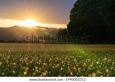 Abstract glistening dew drops at sunrise defocused and lit by rising sun Royalty-Free Stock Photo #1940002312
