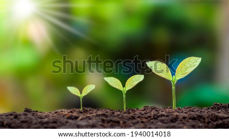 Presentation of plant germination sequence and plant growth concept in the suitable external environment. Royalty-Free Stock Photo #1940014018