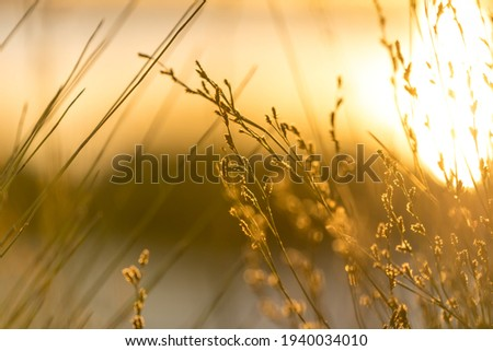 Serene and heavenly golden light cascading across reeds by a beautifully lit lake Royalty-Free Stock Photo #1940034010