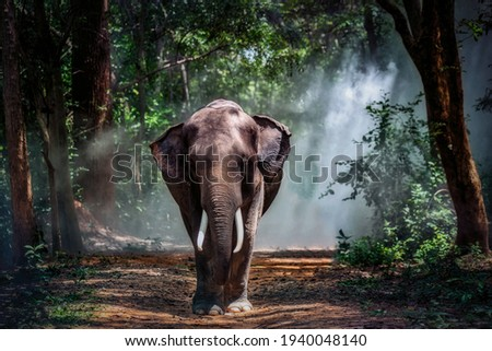 Elephant in the forest.Taken at Surin Province in Thailand. Royalty-Free Stock Photo #1940048140