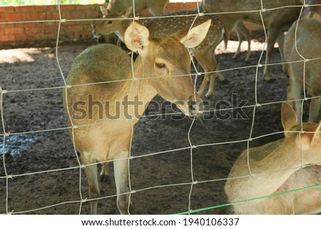 A picture with noise effect of deer in the cage at the farm breed for its meat supply.