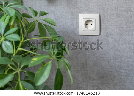 A gray wall with electrical outlet and houseplant. Electricity, safety, energy saving concept. Copy space