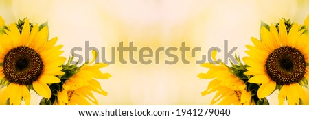 Sunflower flower. Colorful flower.  Flower for beauty postcard decoration and design concept of agriculture. Banner. copy space