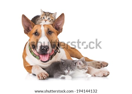 Bull terrier dog with kittens #194144132