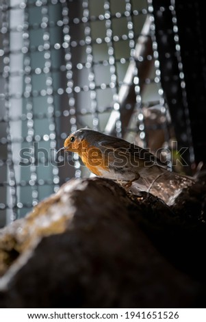 Close up photo of a bird in nature with amazing light