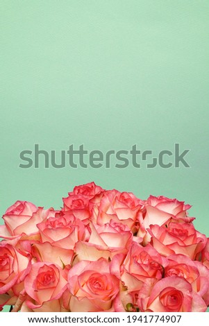 A huge bouquet of white and pink roses on aqumarine paper textured background.  Happy Birthday, Happy Mother's Day, Wedding Day, Valentine's Day, International Women Day greeting card. Copyspace.