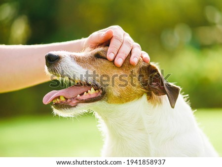 Pet owner uses physical contact to calm down her dog and stop anxiety Royalty-Free Stock Photo #1941858937