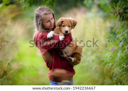 Cute bordertoller mix breed puppy, border collie and toller Royalty-Free Stock Photo #1942236667