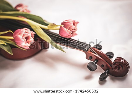 Close-up of wooden violin covered with fresh spring tulips bouquet. Detailed picture of musical instrument, romantic studio decoration. Concept of art, music, antique