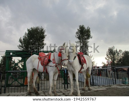 A picture of the beautiful view of horse