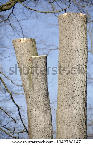 A vertical shot of tree trunk posts Delmenhorst, Germany Royalty-Free Stock Photo #1942786147