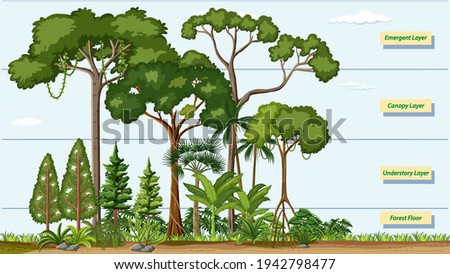 Layers of a Rainforest with name illustration Royalty-Free Stock Photo #1942798477