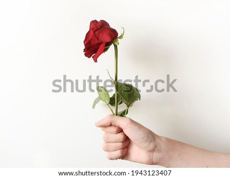 A faded flower as a symbol of the past youth and love. Love is gone, a bad gift. Royalty-Free Stock Photo #1943123407