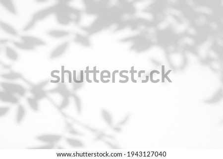Overlay effect for photo. Gray shadow of the wild roses leaves on a white wall. Abstract neutral nature concept blurred background. Space for text.