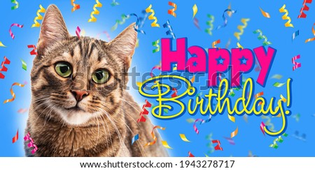 Cute cat and confit on a blue background. Happy Birthday. Text