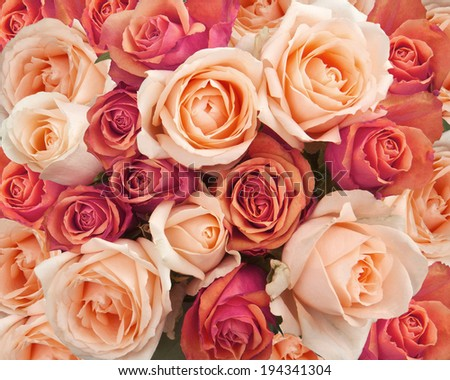 Roses as a background  #194341304