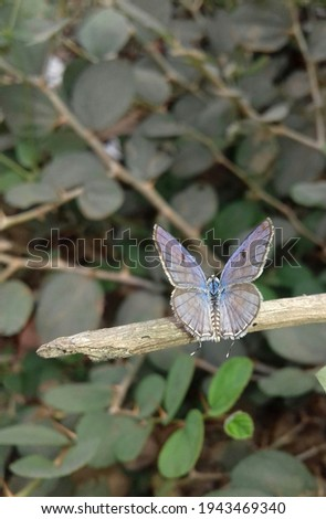 beautiful butterfly stock photo hd