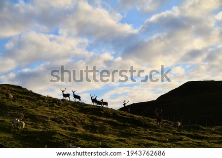 Picture of a group of deers Scottish Higlands
