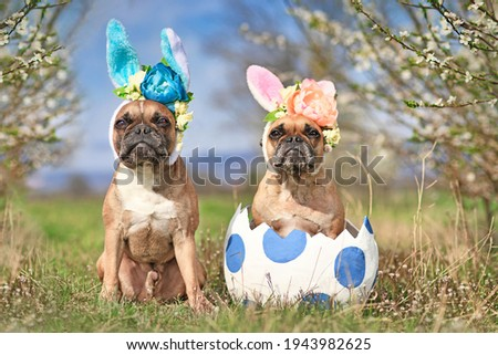 French Bulldog dogs with easter bunny costume ears sitting in giant egg on meadow with cherry blossom trees Royalty-Free Stock Photo #1943982625