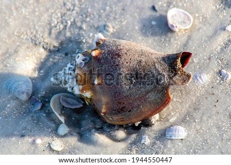 Picture of a seashell  on the beach