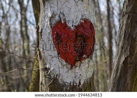 Heart sign on tree in forest road