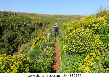Beautiful tranquil green spring landscape in Golan Heights, Northern Israel. Man traveler walks on tourist trail to Daliyot waterfalls. Flowering hills covered with blooming Woody Spurge plant  Royalty-Free Stock Photo #1944882172