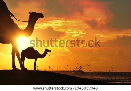Camel in Desert sunset cloudy sky Royalty-Free Stock Photo #1945039948