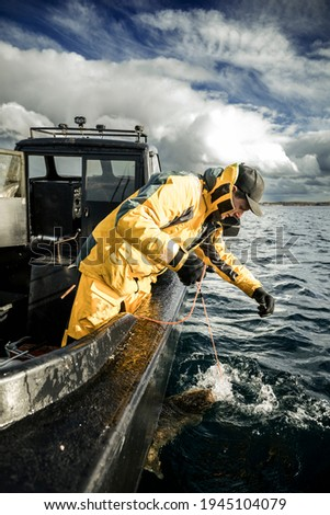 Sports fishing in Norway. A fisherman has caught a Halibut fish. He used Herring as bait, which was a success.  Royalty-Free Stock Photo #1945104079