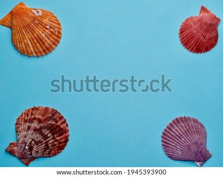Isolated colorful scallop and seashells in four corners of picture against light blue background