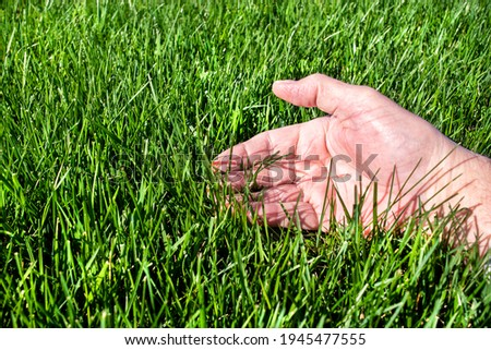 Man examining healthy green grass lawn. Inspecting, inspection, caring, care, looking, thick, outside, sunshine, seed, fescue, tall, watering, perfect, soil, manicured, blade, thick, perfect Royalty-Free Stock Photo #1945477555