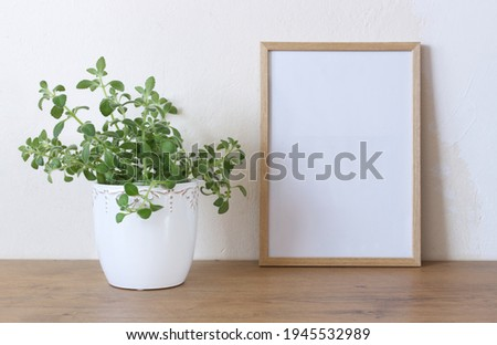 Spring still life. Blank wooden picture frame mockup on wooden table, Medicinal herb Plectranthus amboinicus. Common names in English include Indian borage, country borage, French thyme.