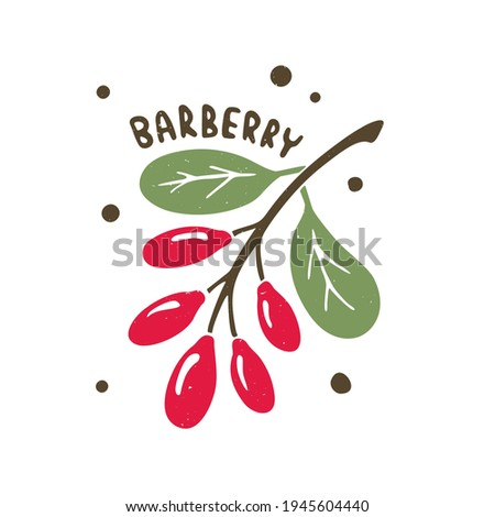 Colorful barberry illustration with hand drawn lettering isolated on transparent background. Ripe berries on a branch Royalty-Free Stock Photo #1945604440