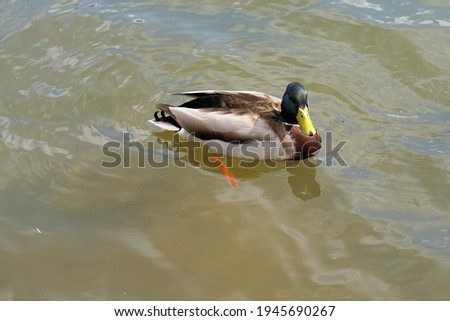 A group of pictures of ducks in an amusement park. Beautiful pictures
