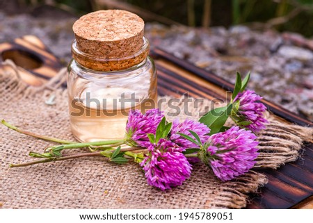 still life with Trifolium pratense, red clover. Collect valuable flowers from moment of flowering, Decoction of clover and infusion in clear bottle with cork. alternative medicine. Soft focus