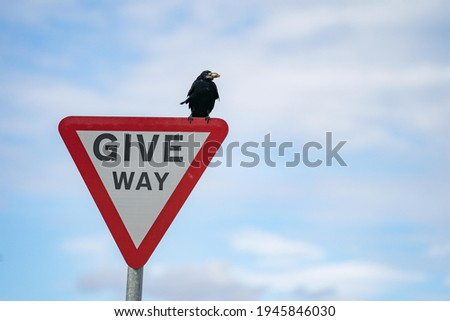 """A sign on the road says """"GIVE WAY"""" with raven sitting on."""