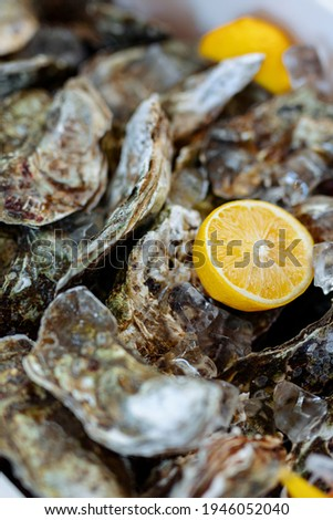 closed oysters, fresh oyster shell, mollusks in seafood market, sea restaurant, expensive fresh food, dish restaurant menu Royalty-Free Stock Photo #1946052040