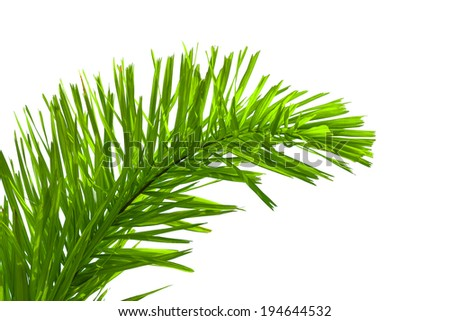 leaves of palm tree isolated on white background, clipping path included #194644532