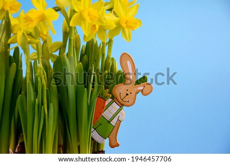 Fresh spring daffodils with easter bunny on a blue background frame stock images. Easter rabbit wooden decoration in yellow daffodils flowers stock photo. Spring blue border with beautiful narcissus