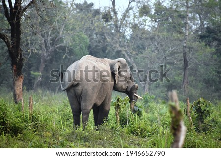 Tusker in a jolly mood Royalty-Free Stock Photo #1946652790