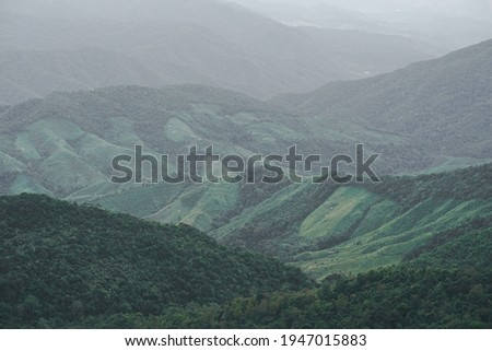 Panoramic landscape picture of fresh green rain forest and mountain background.