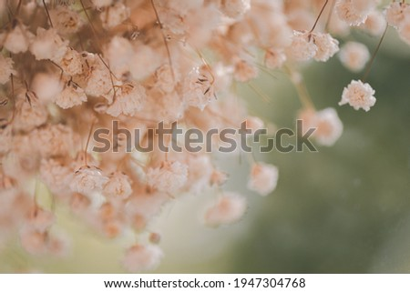 The view through the glass of dry white gypsophila flowers, Cinematic tone. Royalty-Free Stock Photo #1947304768