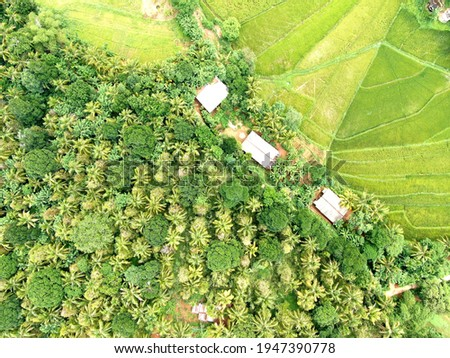 Aerial view of forest and paddy field together which enhance the greenery of the land srilanka this photo is captured in djimavic2zoom drone