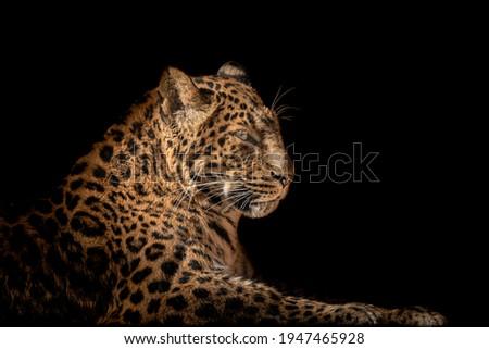 a leopard portrait with black background, creative picture