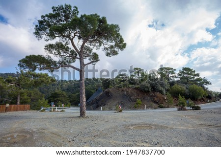 Beautiful landscape with road, mountains and tree. A winding road in the mountains, where coniferous forests grow against a background of blue sky and white clouds. Troodas Mountains in Cyprus Royalty-Free Stock Photo #1947837700